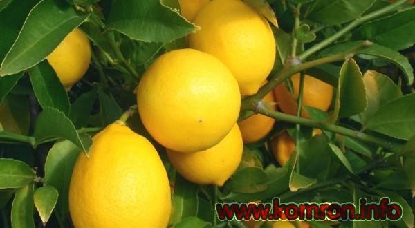 lemon-600x330