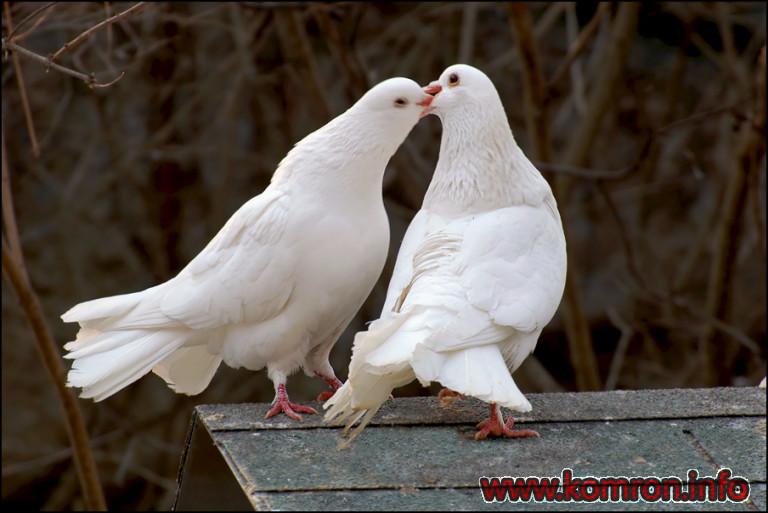 love_18-768x513