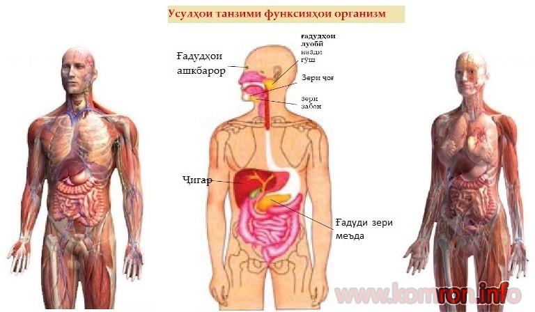 organizmi-odam