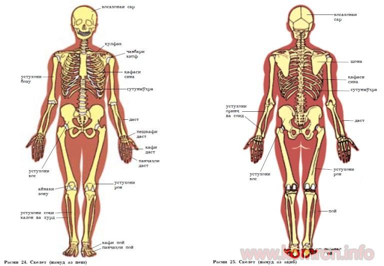 skeleti-odam-768x533
