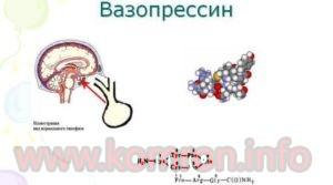 vazopresin