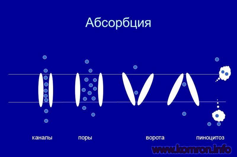 absorbsiya