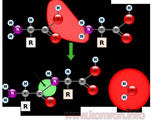 aminokislotaho