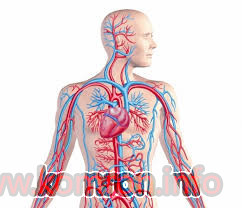 angiologiya