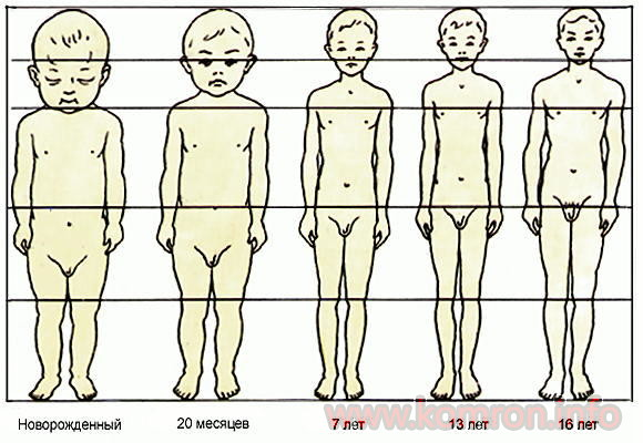 antropometriya