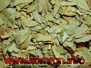 Cassia senna - Cesalpiniaceae