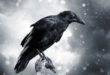 Raven with stormy sky
