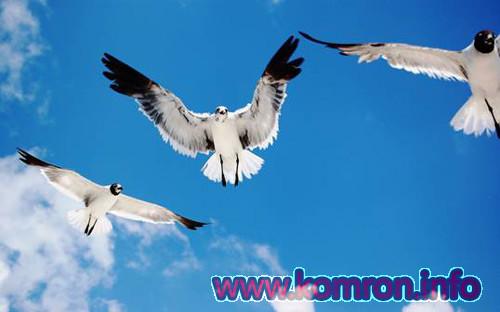 Parranda: Didani tabiri khob – kitobi khobnoma bo manoyash