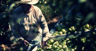 sbor-fruktov