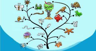 биология чист