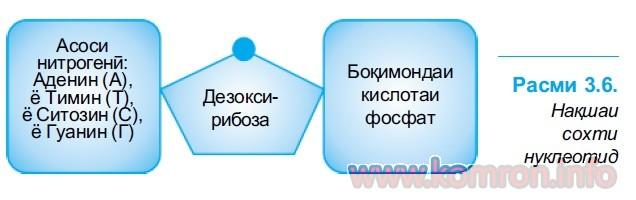 полимерхои биологи