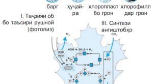 fotosintez-
