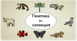 genetika-i-selekcia