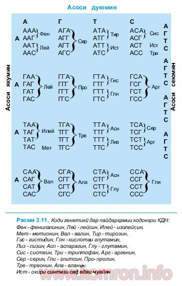 kodi-geneteki