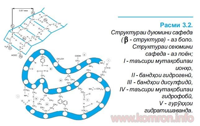 polimeri