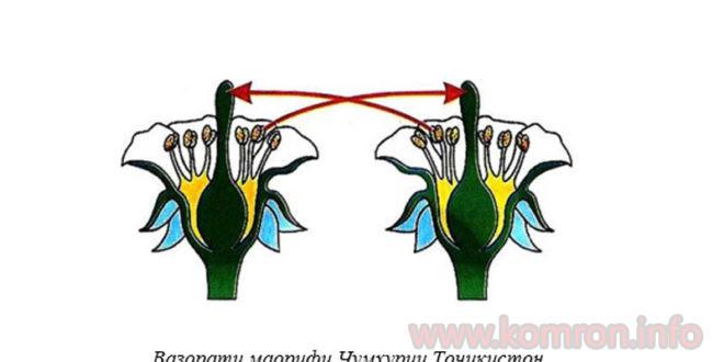 Китоби дарсии Ботаника барои синфи 5-ум