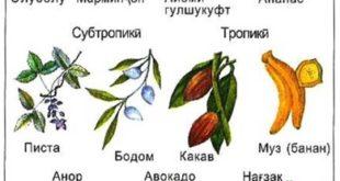 hosilshavii-tuxm