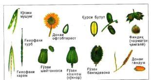 mevai-tar-xushk