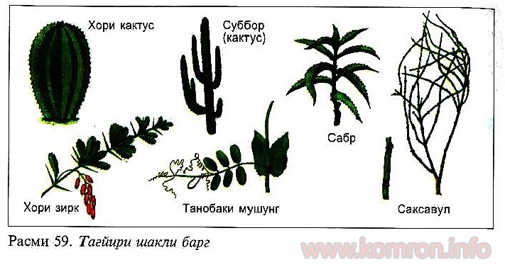 mutobiqshavii-rastani