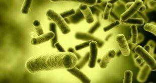 bakteriya-1