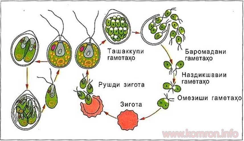 botanika_6