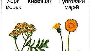 Муракабгулҳо
