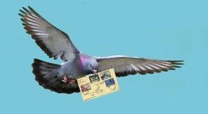 pochtovyi-golub-s-pismom