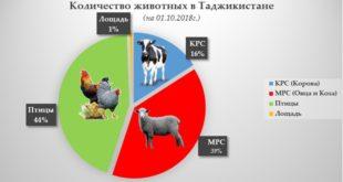 Птицеводство в Таджикистане (Аналитическая статья)