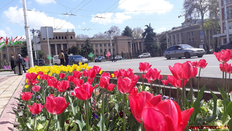 Гулхои Душанбе (сурати лола – тюлпан)