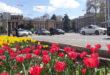 Тюльпаны в городе Душанбе