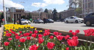 Тюльпаны в Душанбе