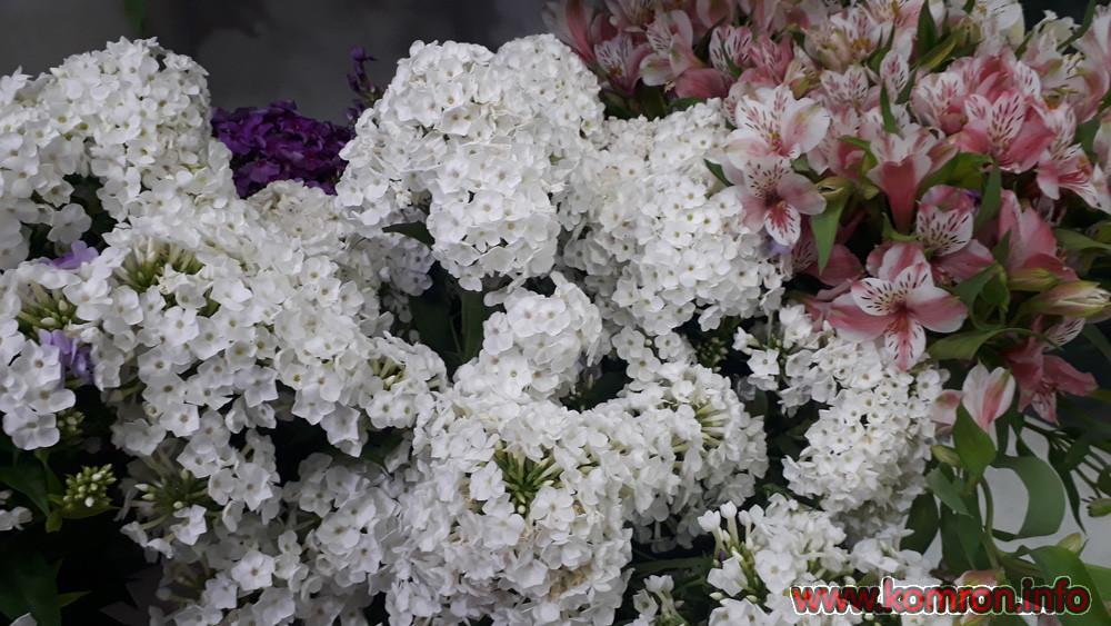 gul-cveti-1