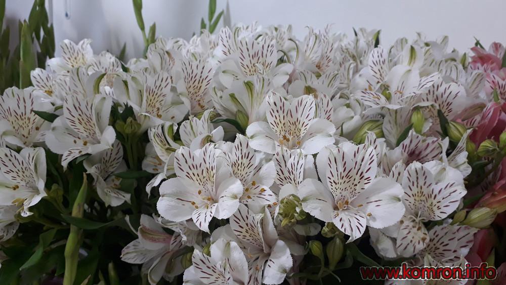 gul-cveti-10