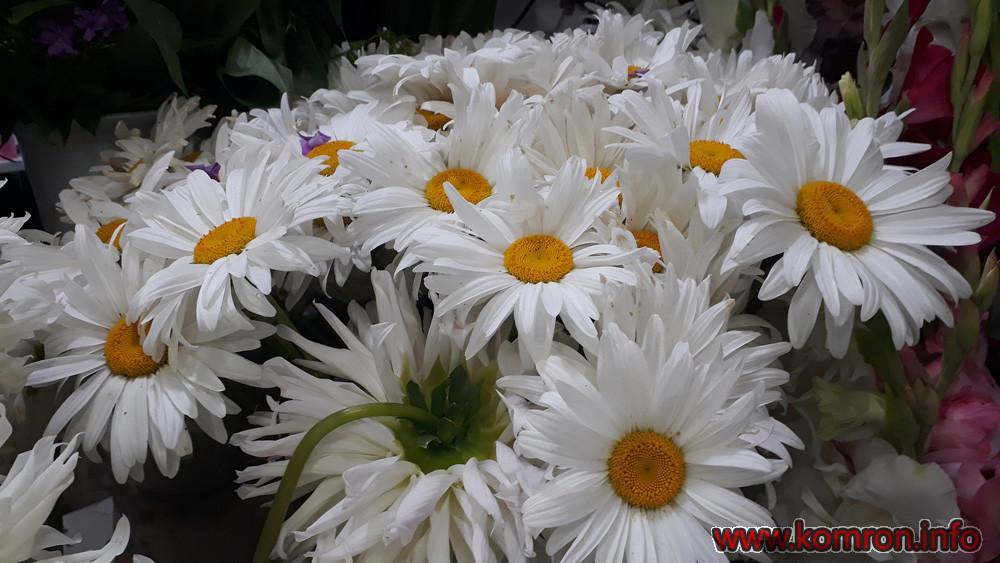 gul-cveti-11