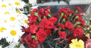 gul-cveti-3