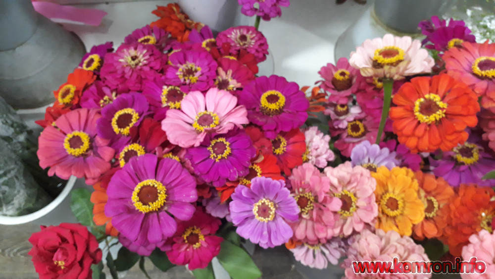 gul-cveti-4