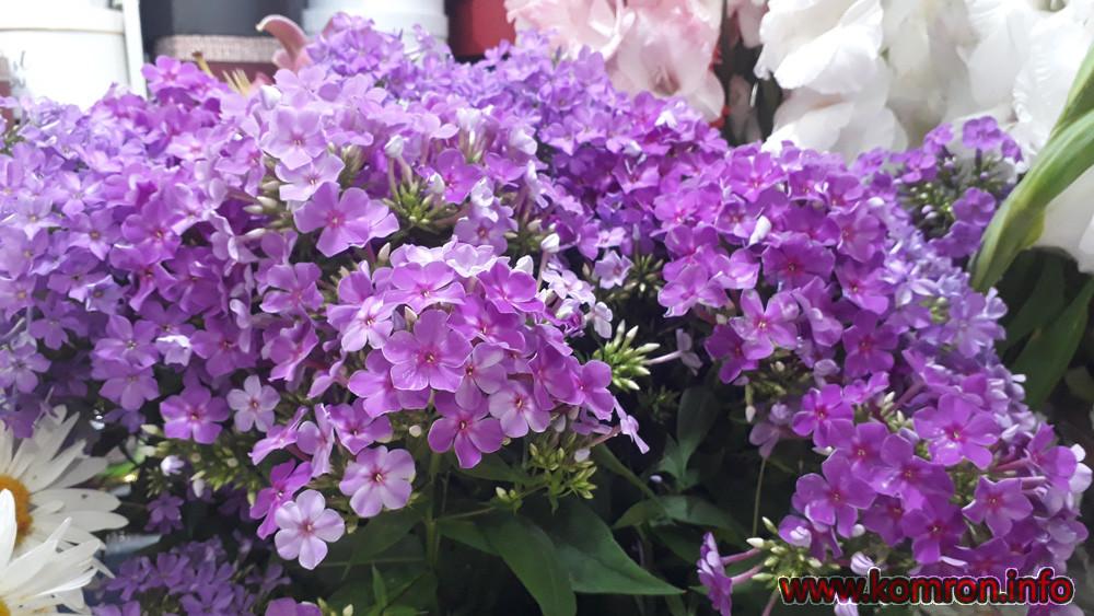 gul-cveti-8