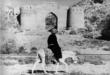 Санӯсиён – Равия дар Ислом
